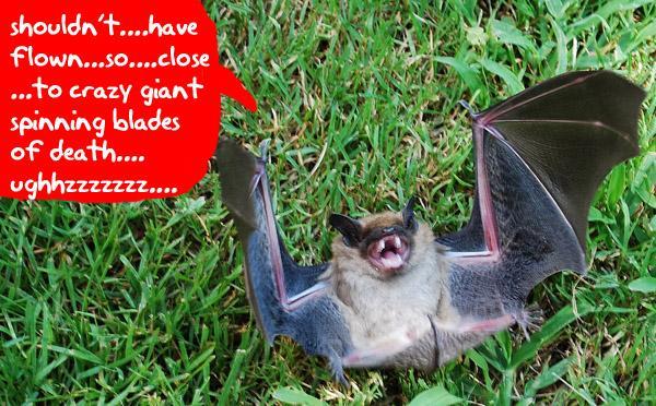Image from Gizmodo.com